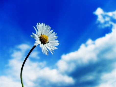 Music and life ~: blue sky and white flower